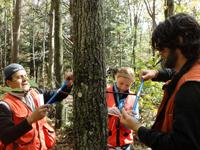 researchers taking forest measurements