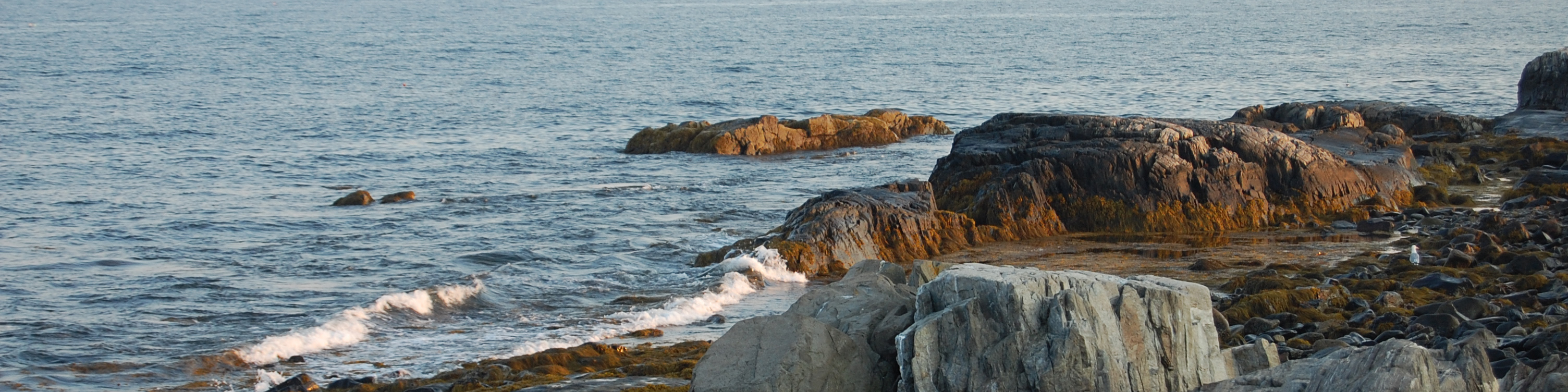 Rocky shoreline with tiny waves rolling in near the seaweed.