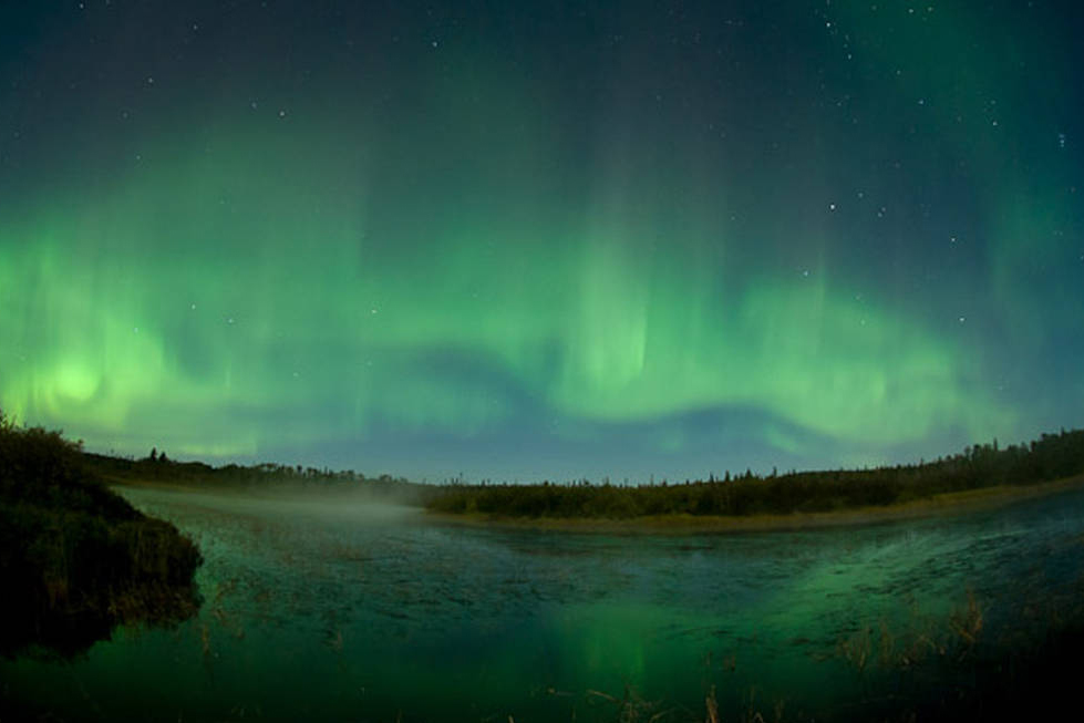 Green and blue northern lights light up the night sky with dark trees in the background.