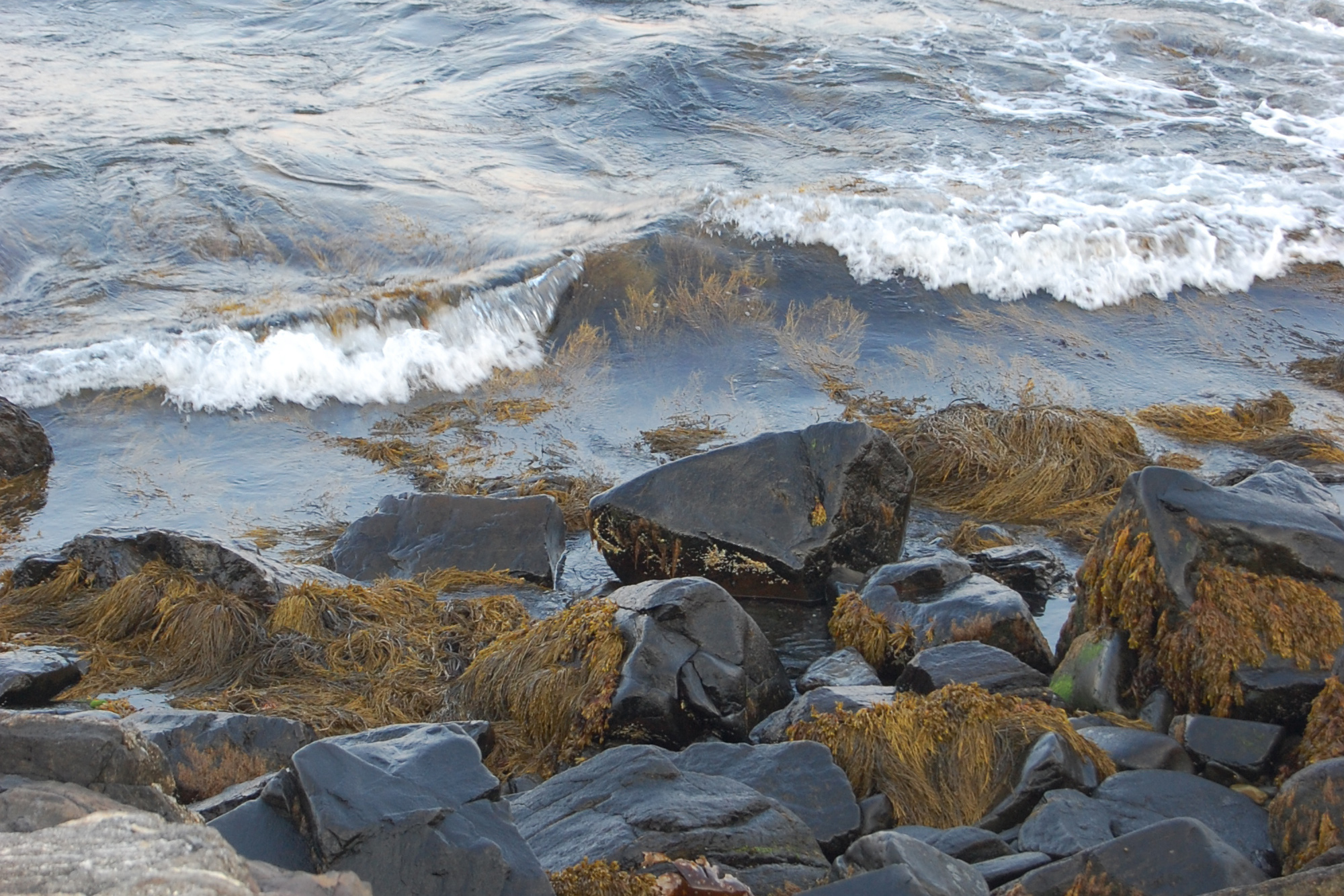 A rocky shoreline with seaweed and small shallow waves breaking over.