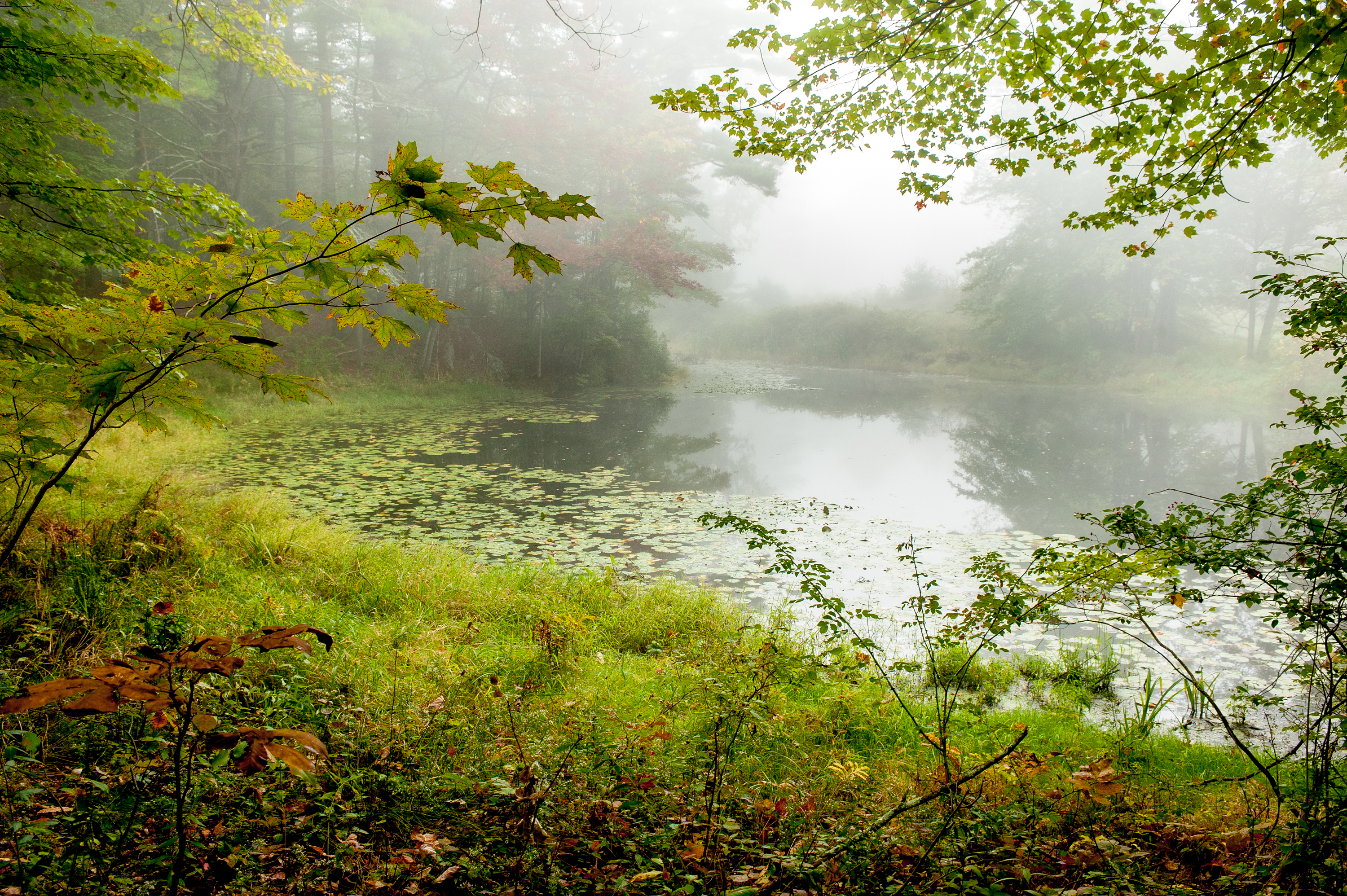 Foggy morning by a pond with green trees and grass framing the shot.
