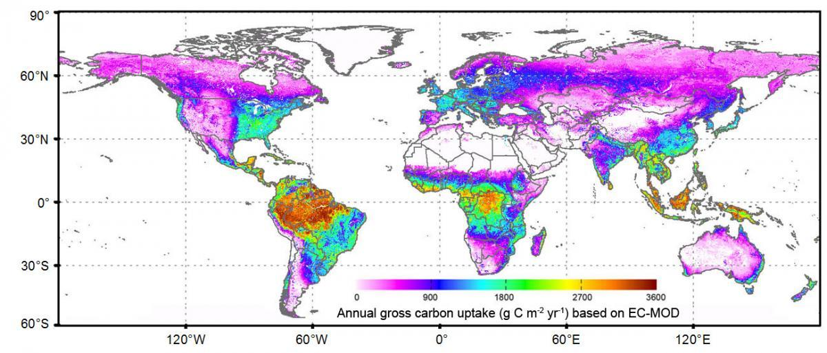 A global map of carbon uptake